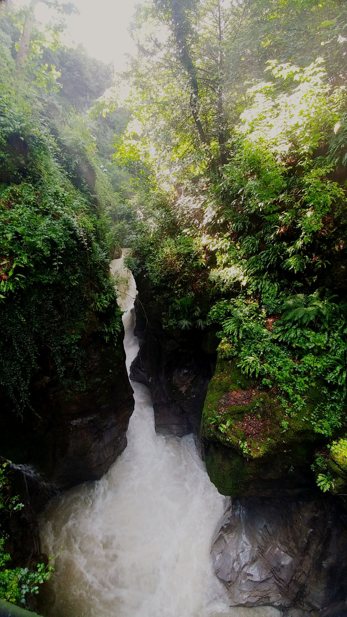 Water Tree River Nature Green Color Beauty In Nature Outdoors No People Plant Waterfall Sunlight Forest Freshness Nature Photography Nature Orrido Orridodibellano Italy❤️ Lagodicomo
