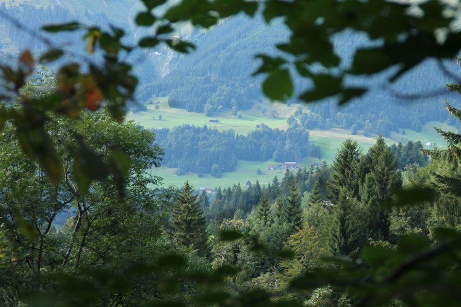 Een super mooi uitzicht over de dalen Hello World Trees Bludenz Mijn Uitzicht Schönes Wetter Nice View Österreich In Österreich Genießen EyeEm Nature Lover Hanging Out