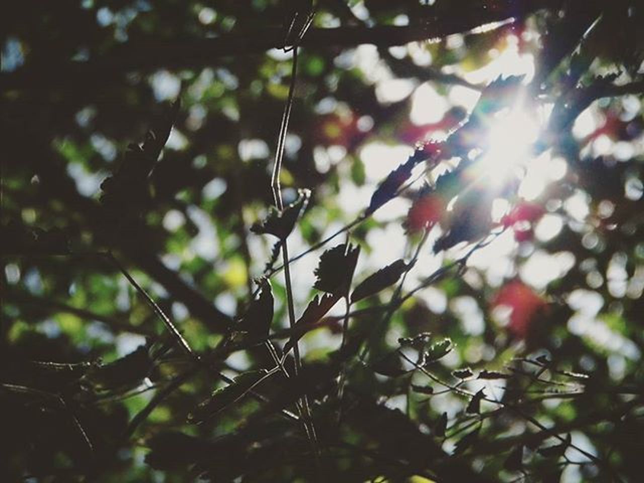 nature, tree, outdoors, no people, day, beauty in nature, growth, animal themes, branch, fragility, freshness, close-up