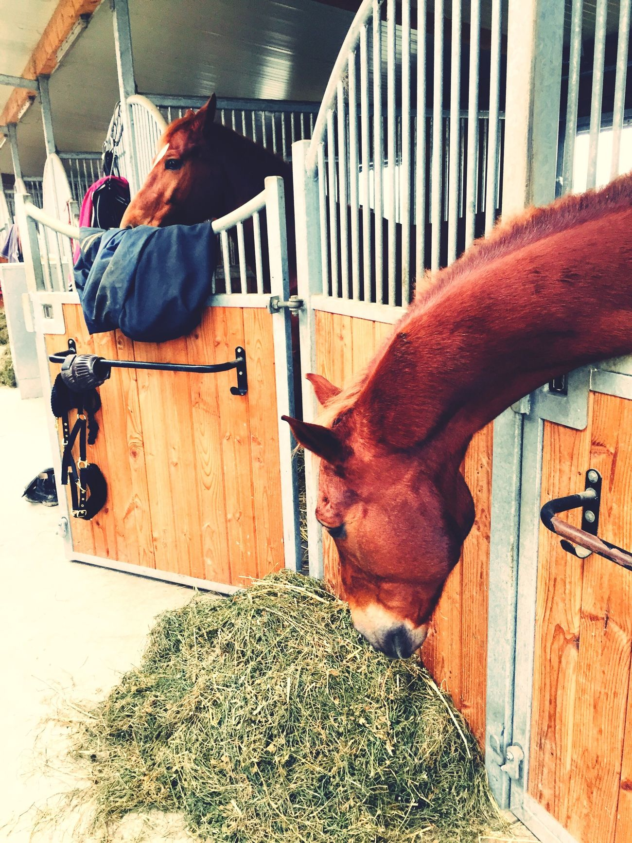 Forever different ;) Animals Playing With The Animals Stable Horse Horse Riding Horses Kiyomi Mitsuki