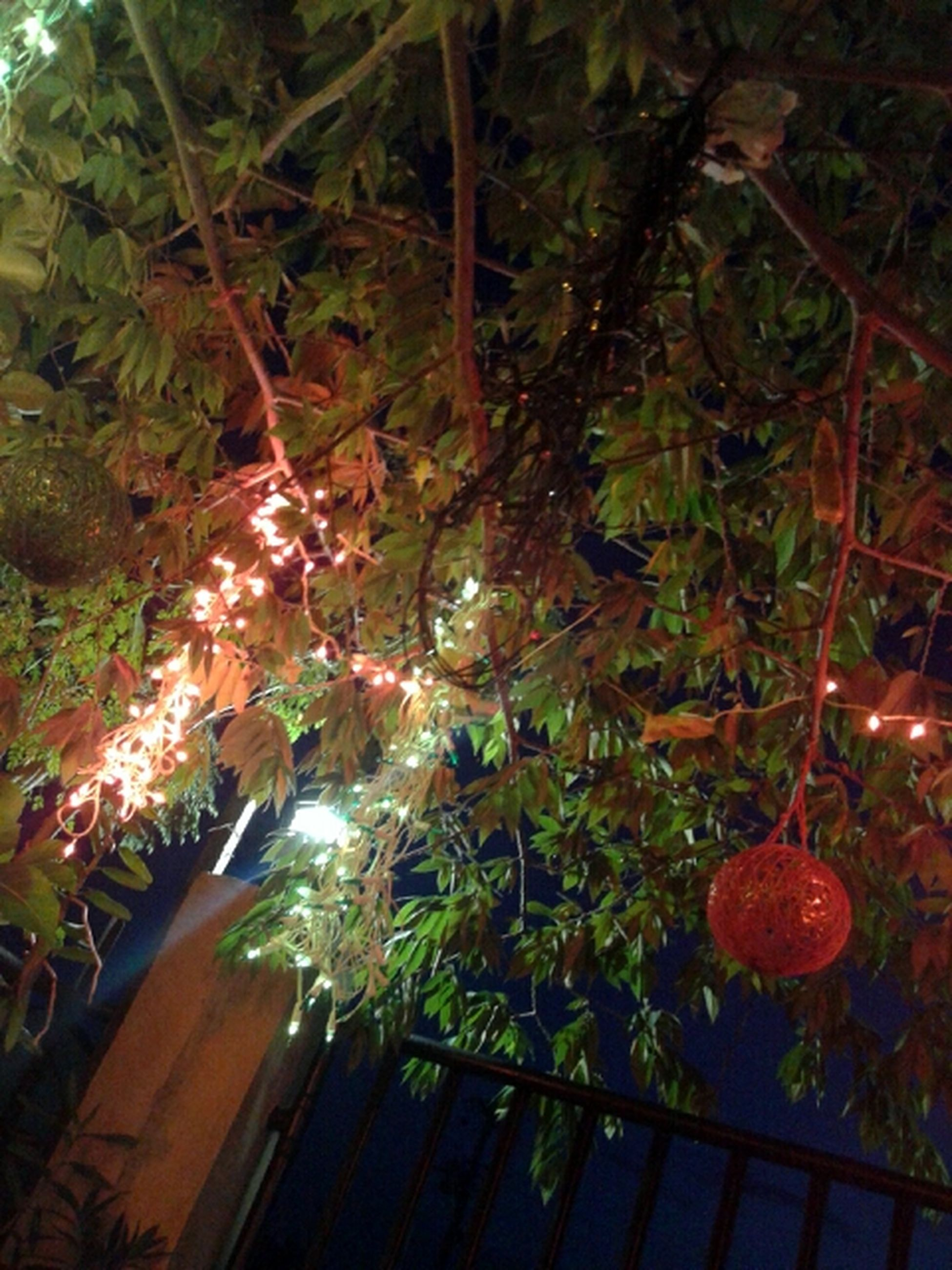Elegance Everywhere Christmas Lights Holiday Light New Year Around The World