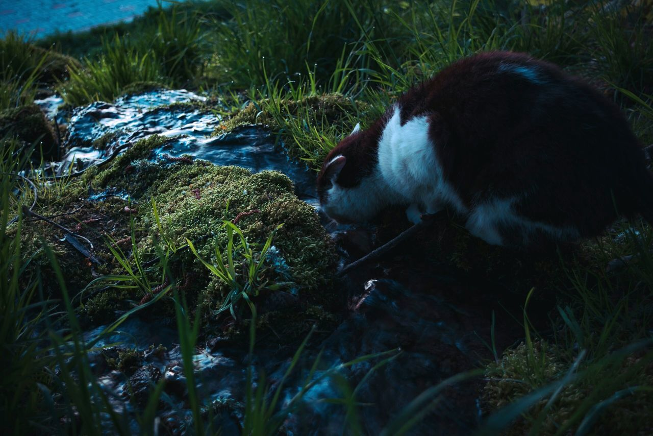 one animal, grass, animal themes, mammal, no people, domestic animals, pets, outdoors, day, nature, close-up