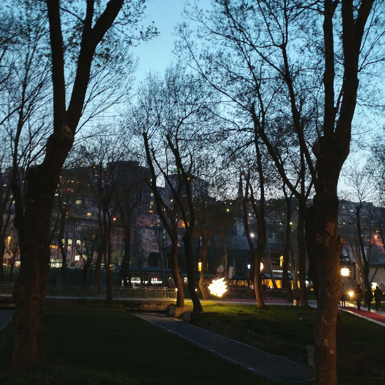 Tree Sky No People City Outdoors Nature Sunset Growth Architecture Day University Campus University Istanbul Turkey LG G5 Photography