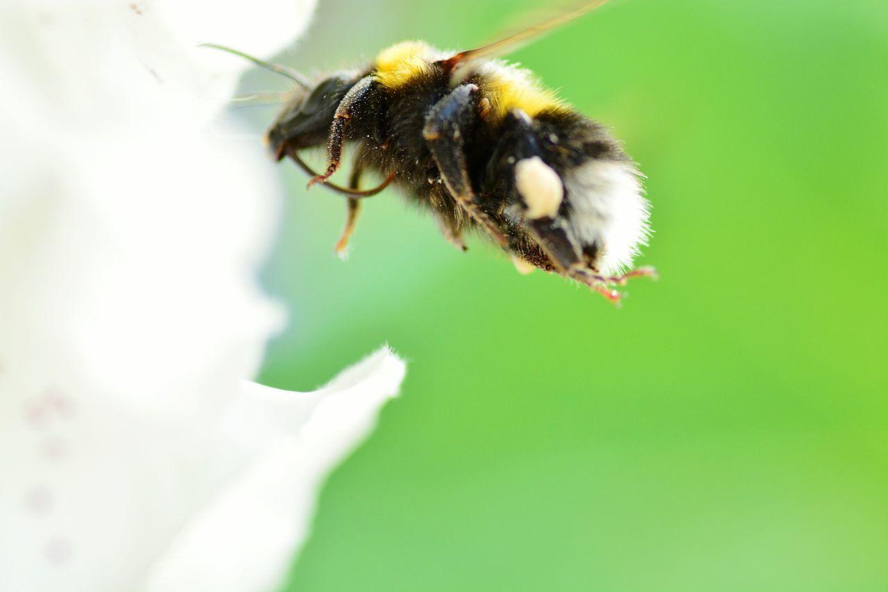 Beautiful stock photos of bee, , Animal Themes, Day, Entomology