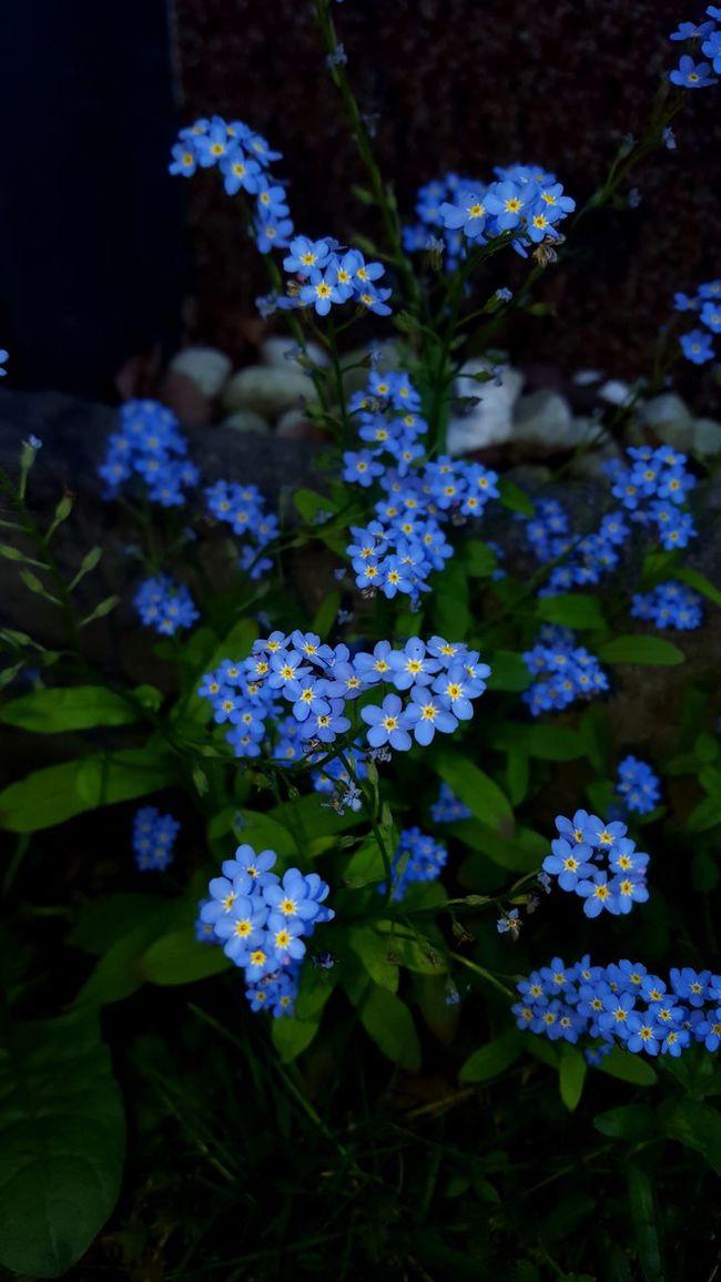 Relaxing Leverkusen Garden Flowers Samsung Galaxy S6 Blumenfotografie Beautyful