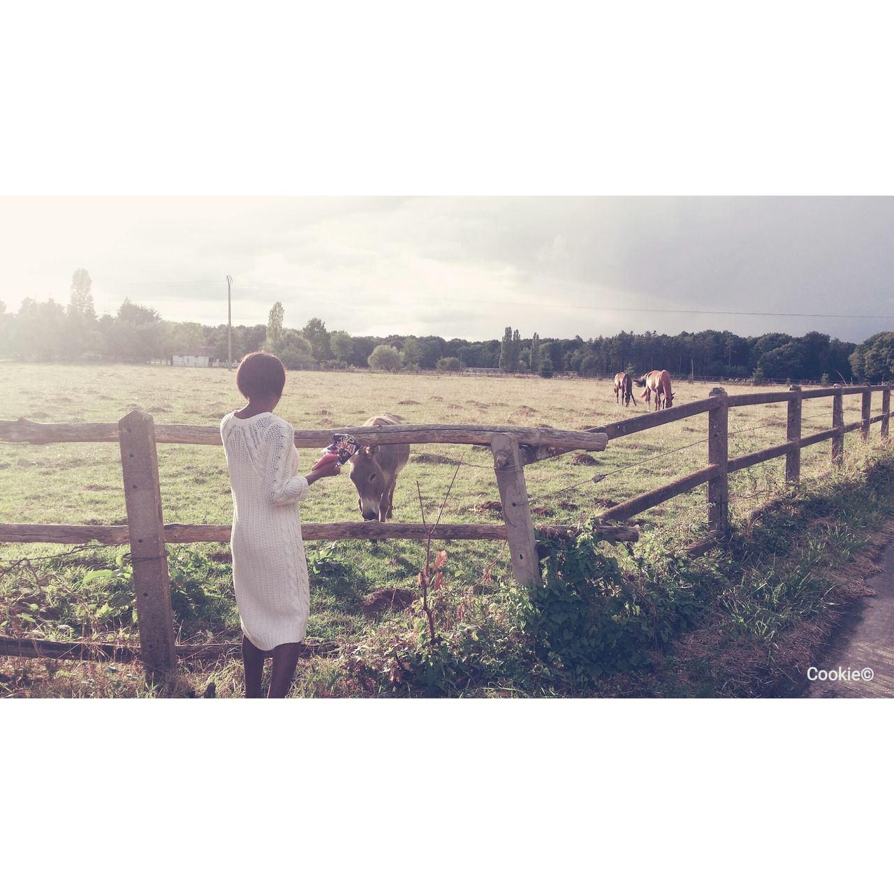 One Girl Only Sky Friendship One Person Outdoors Clear Sky Tranquil Scene Sunset Tranquility Beauty In Nature Horses Horse Life Day Nature Nature Photography Naturelover Country Life Country Girl Country Side Child Children Only Childhood Girls Full Length Rear View