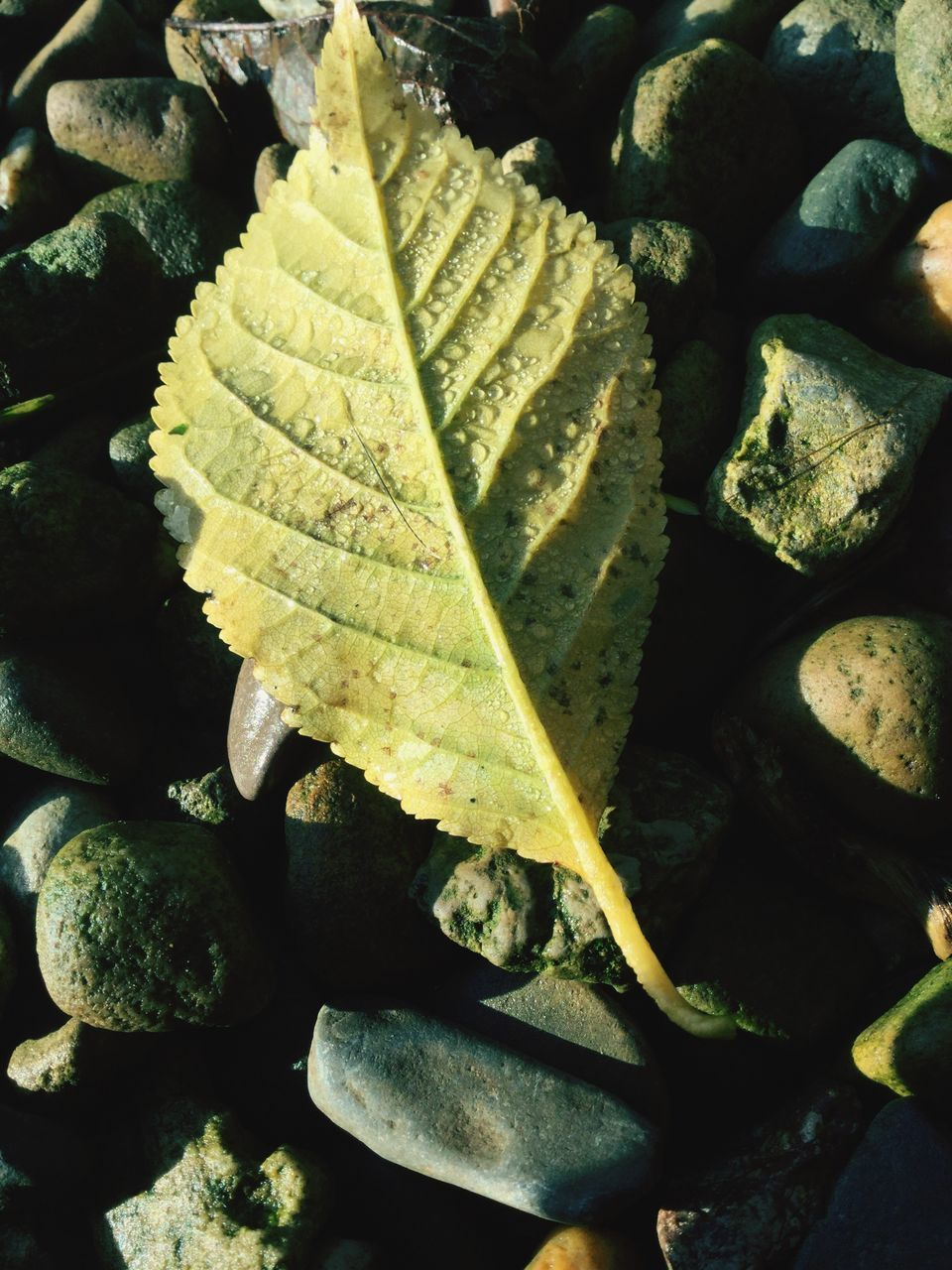 leaf, no people, day, nature, close-up, outdoors, water, beauty in nature, freshness