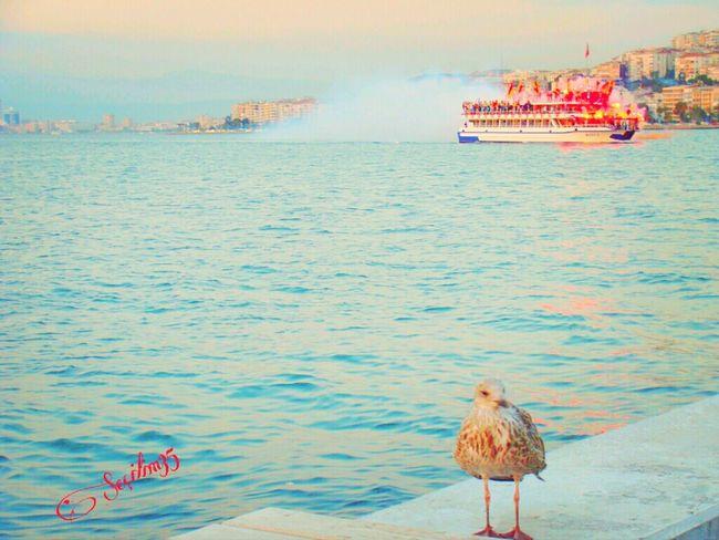 Happy Valentin's Day :) Göztepe'm. Reflection Nature Happy Love Seagulls Turkey Izmir Seascape Nature_collection