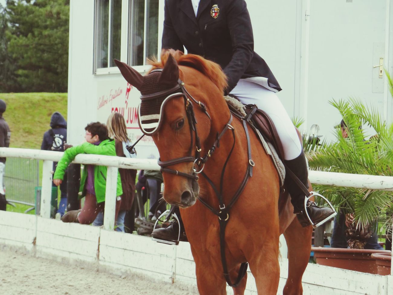 My love! Forever different ;) Mitsuki Kiyomi Horse Riding Horse Horses Playing With The Animals