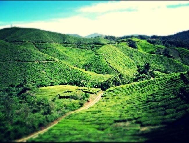 Asian Culture Teaplantation ASIA Travel Malaysia Cameronhighlands