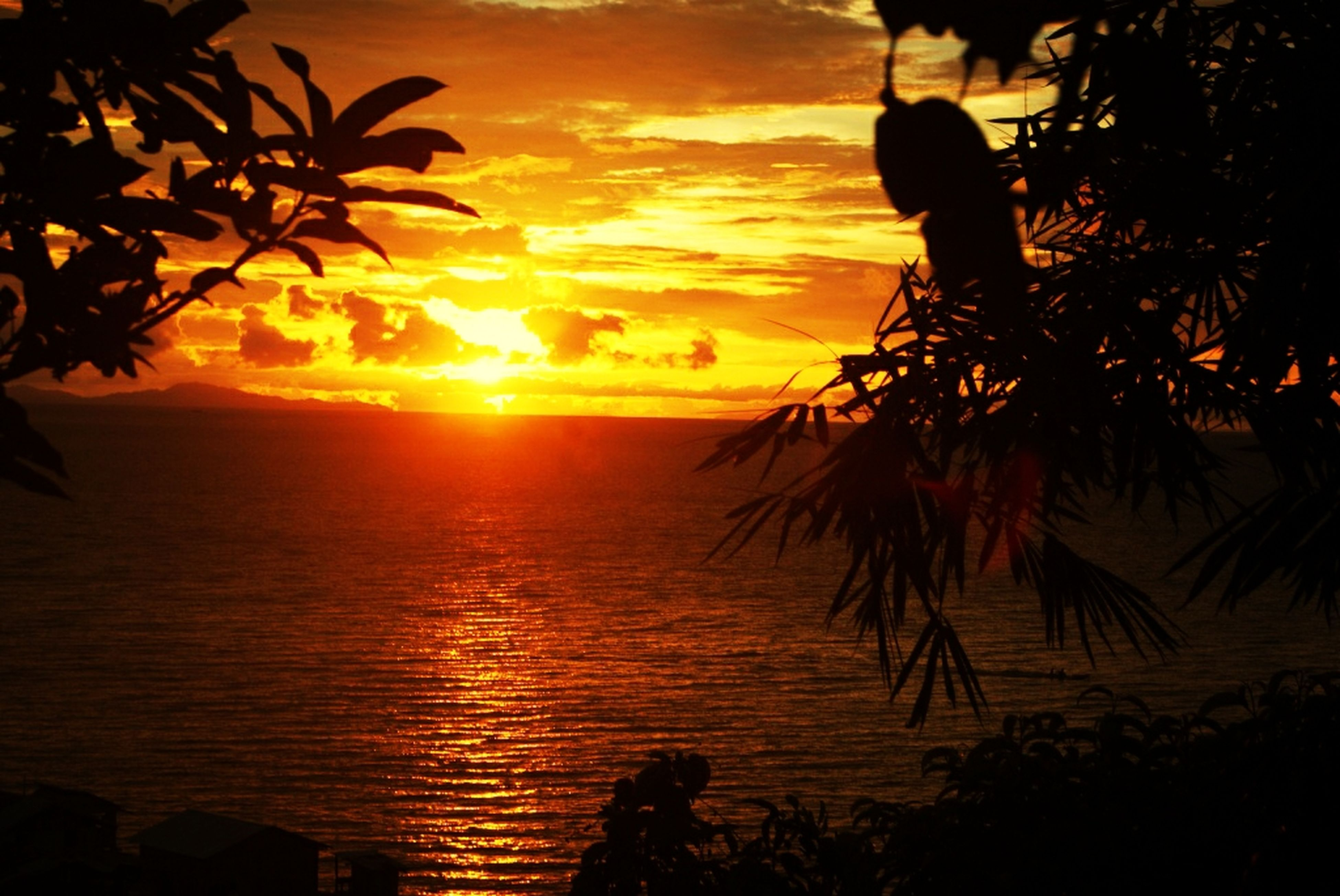 sunset, horizon over water, sea, water, sun, beauty in nature, tranquil scene, scenics, tranquility, silhouette, sky, orange color, beach, palm tree, nature, idyllic, tree, sunlight, shore, reflection
