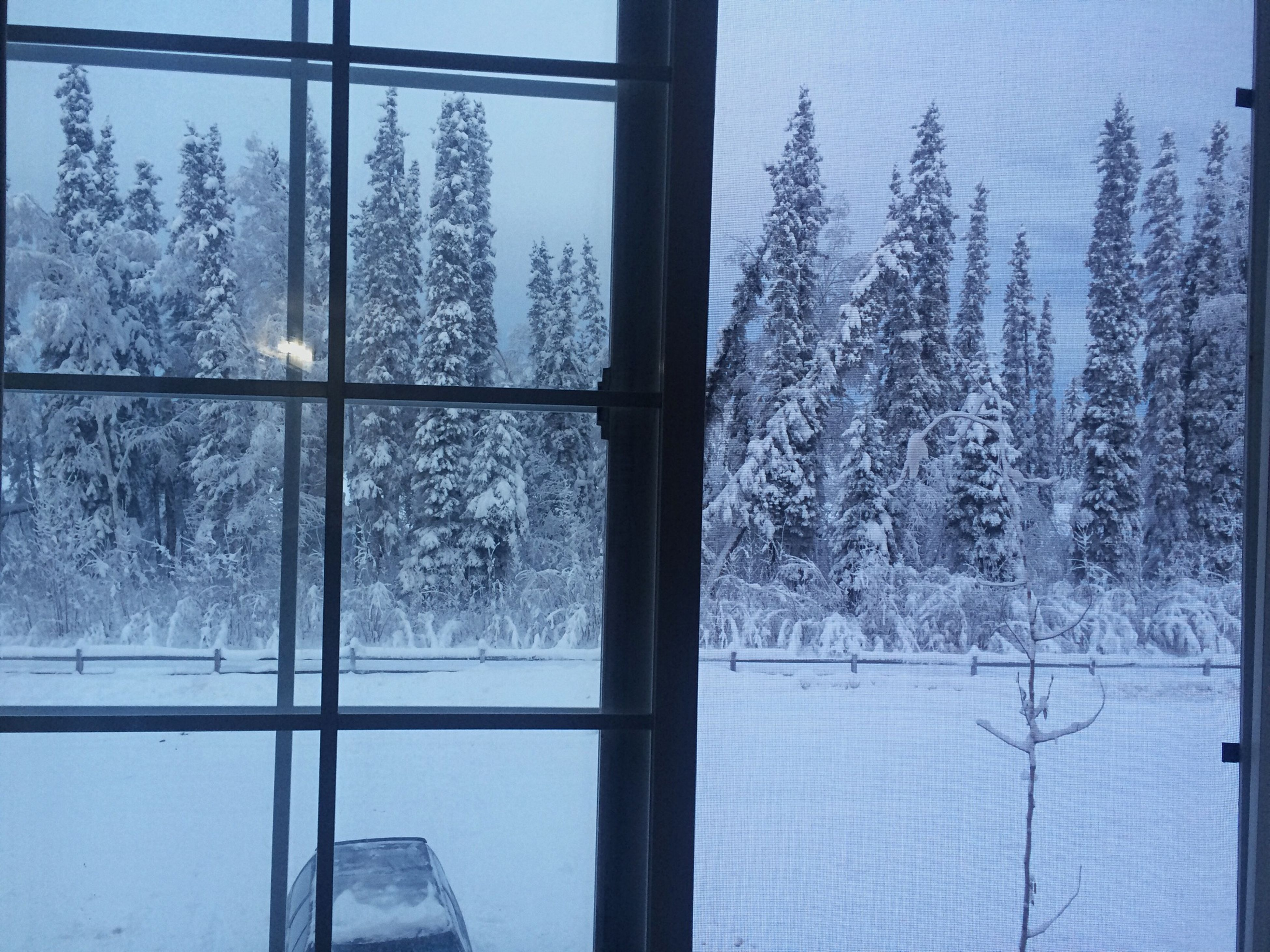 Enjoying The View Aynaphotography Through The Window Trees Winter I Love It ❤ Alaska Amazing View Clouds And Sky Snow