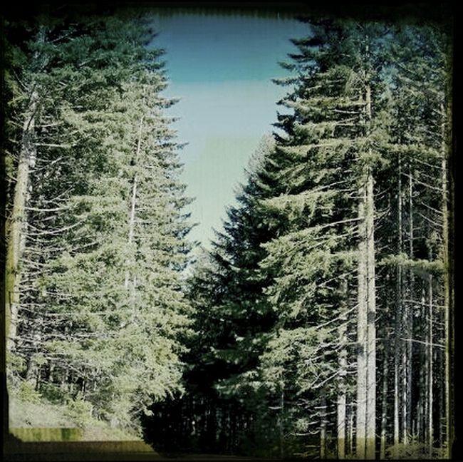 Enjoying Life Tillamook Forest