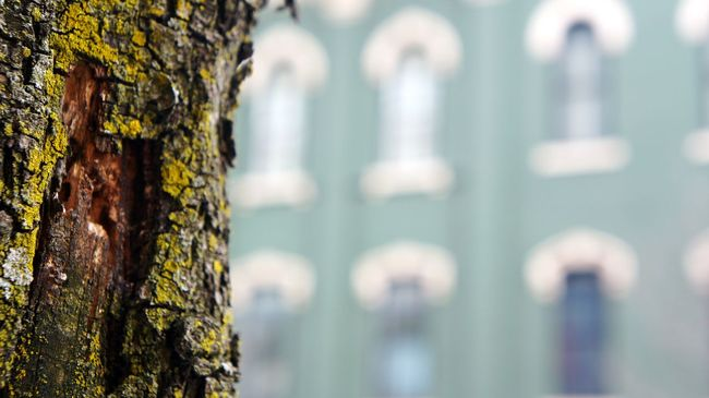 Architecture Backgrounds Building Close-up Day Detail Focus On Foreground Full Frame Green Growth In A Row Lychen Nature No People Old Outdoors Part Of Pattern Rough Textured  Tree Tree Trunk Up Close Street Photography Urban Photography Window