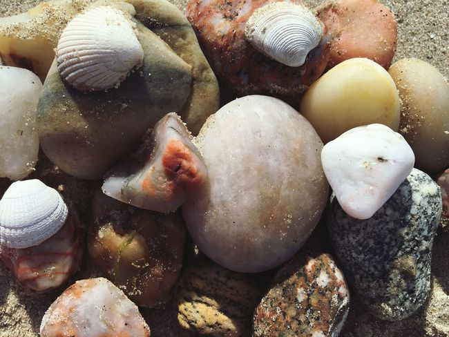 Sea Shells and rocks Beach Outdoors Nature Pebble Rock Colors Beauty In Nature Shell Photography Photooftheday