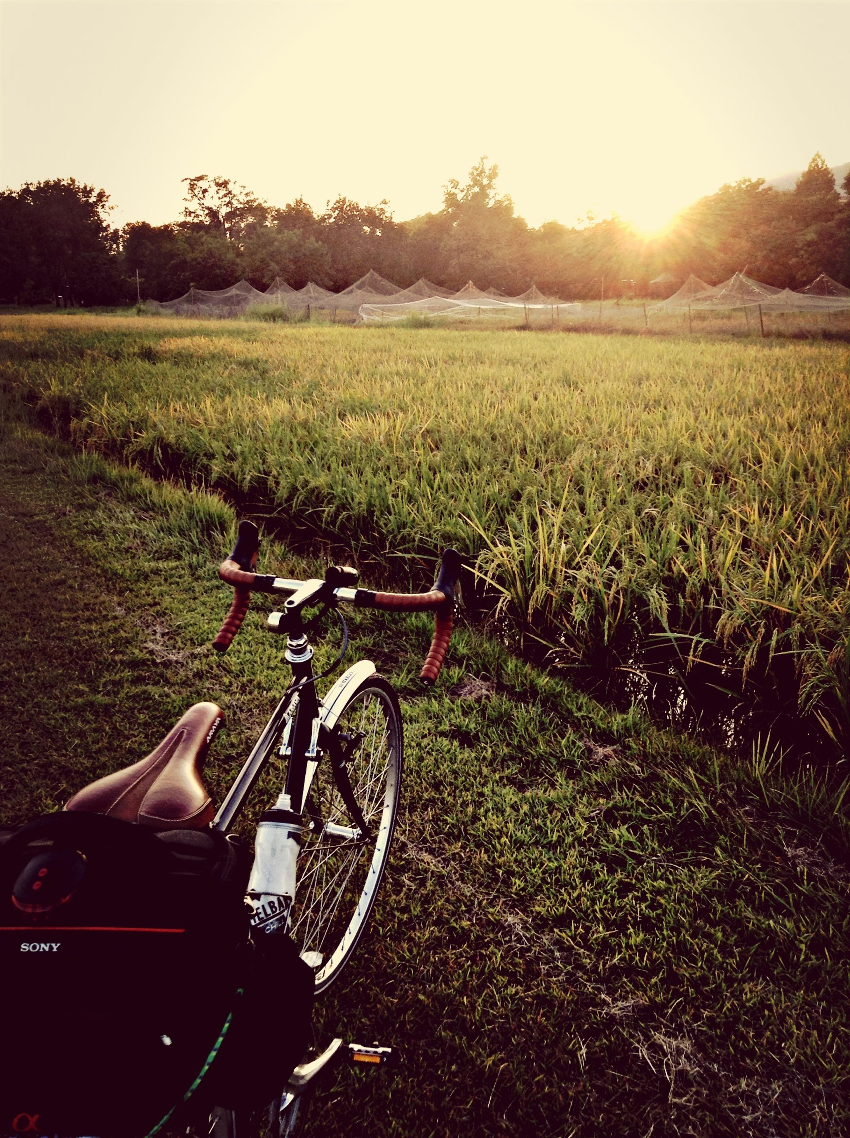 transportation, land vehicle, mode of transport, bicycle, grass, field, car, landscape, sunlight, sun, grassy, stationary, riding, road, clear sky, sunbeam, nature, parked, rural scene, parking