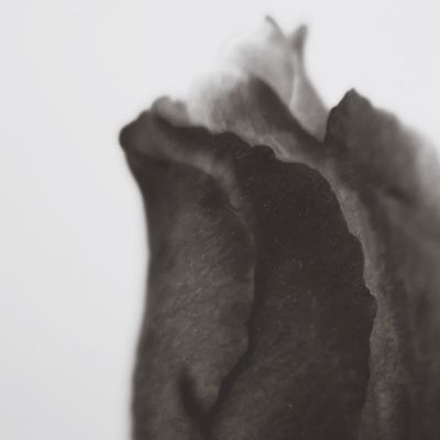 a rose is a rose is a...bruno munari Roses Close-up Abstract Monochrome Texture Leica D-lux Typ109 Valentine Sensual 💕 Poetry In Pictures