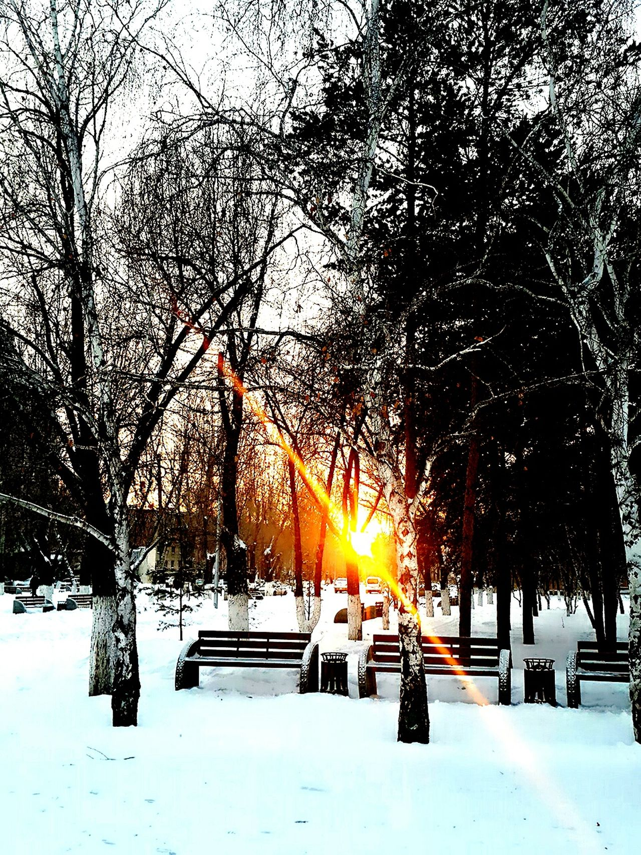 Cold Temperature Snow Tree Sunlight Landscape Beauty In Nature Winter Outdoors Snow Sports Snow Sports