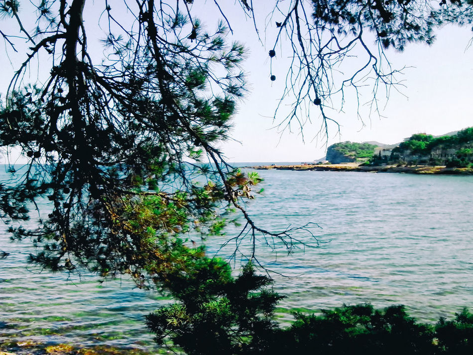 Branch On Foreground Clear Sky Clear Sky Summer Day Clear Water Daylight Emerald Green Ibizan Sea Nature No People Sea Sea And Sky Tranquil Scene Tranquility Transparent Water Tree