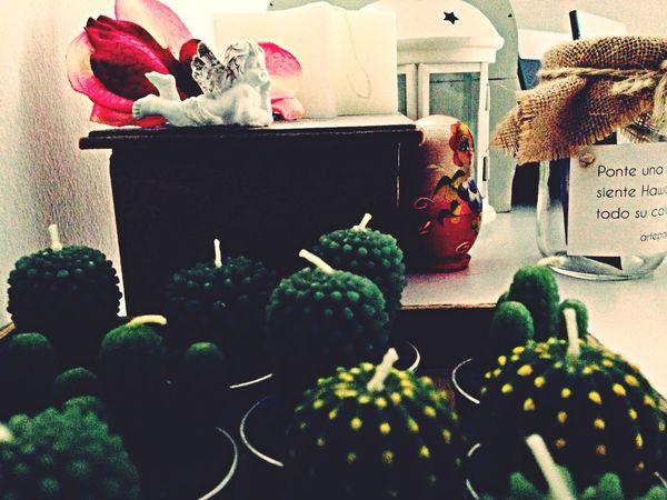 My Angels Cactus Flower My Room