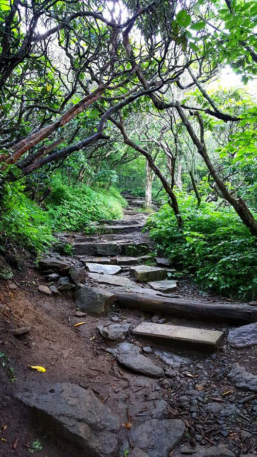 Trail Going Up Uphill Thick Forest Lush Foliage Plants Steps Hiking Hiking Trail Path Discovery Adventure Humid Climate Day Summer Wet Path Scenic Nature Canopy Brush Craggy Gardens Craggy Pinnacle Blue Ridge Parkway Blue Ridge Mountains