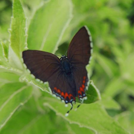 butterfly effect Butterfly EyeEm EyeEm Nature Lover Taking Photos OpenEdit Leica D-lux Typ109