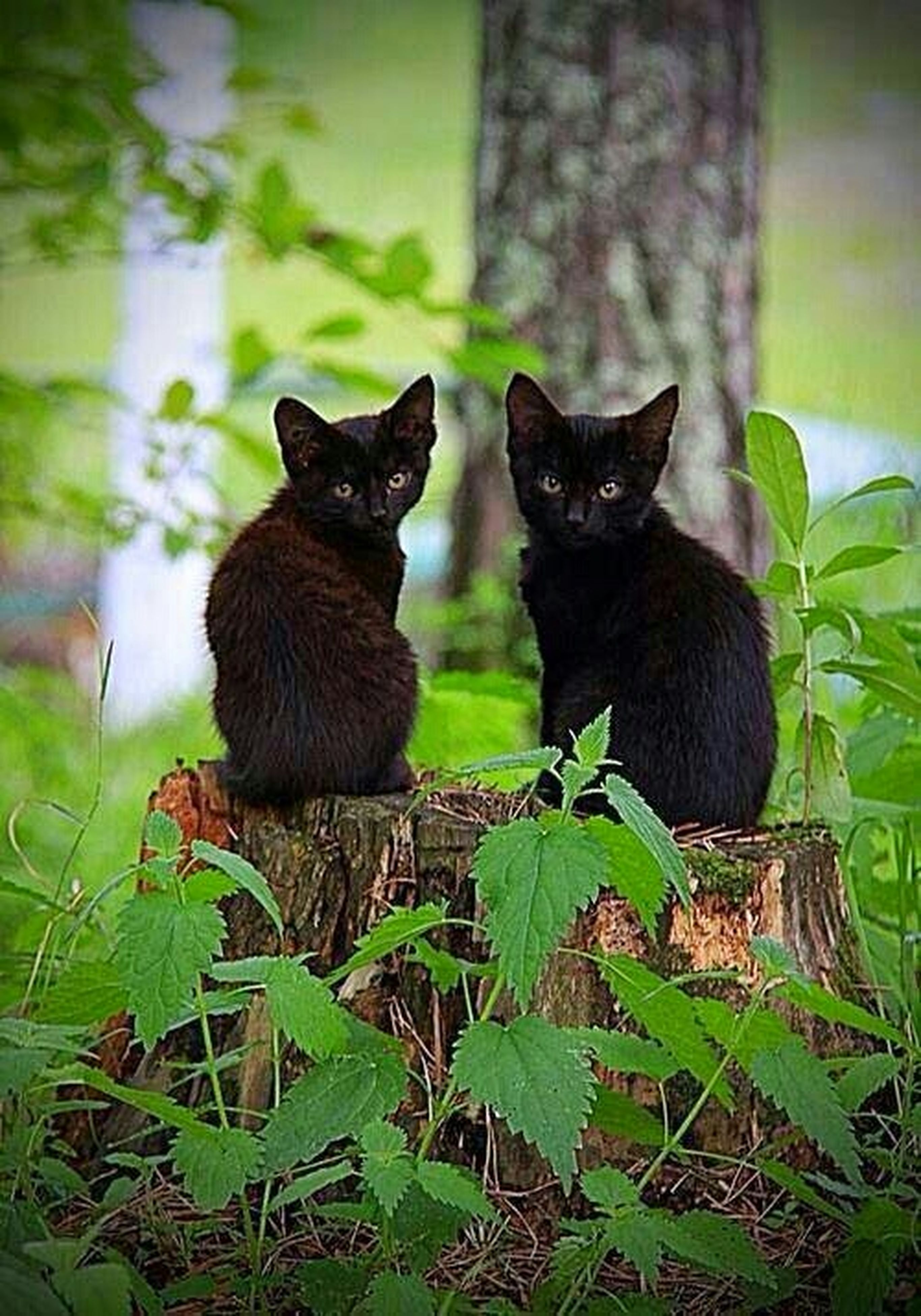 animal themes, one animal, domestic cat, cat, pets, feline, mammal, domestic animals, sitting, whisker, looking at camera, portrait, black color, relaxation, alertness, plant, leaf, focus on foreground, staring