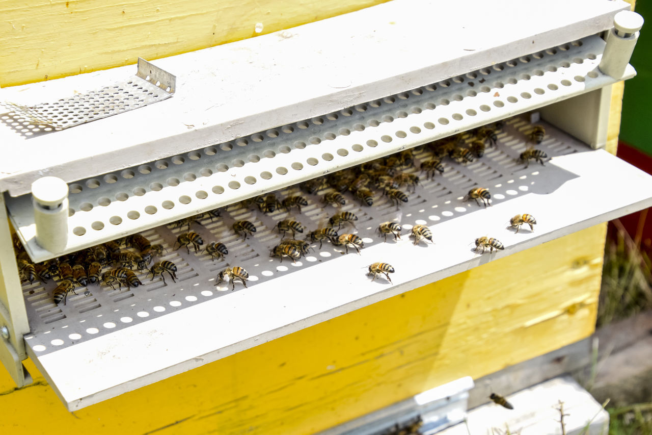 beehive, apiculture, bee, honeycomb, insect, no people, high angle view, day, yellow, outdoors, large group of animals, animal themes, nature, close-up