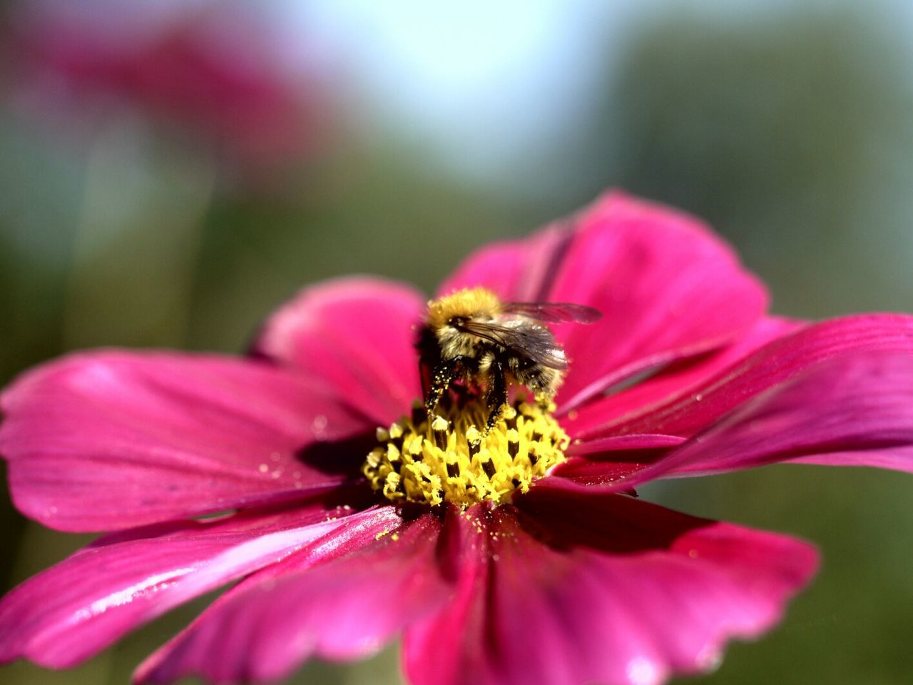 Close Up Of Bee Perching On Flower