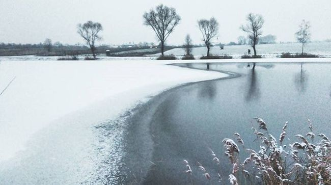 Winter Snow Pond Ice Trees Sky Dubnany Mocidla