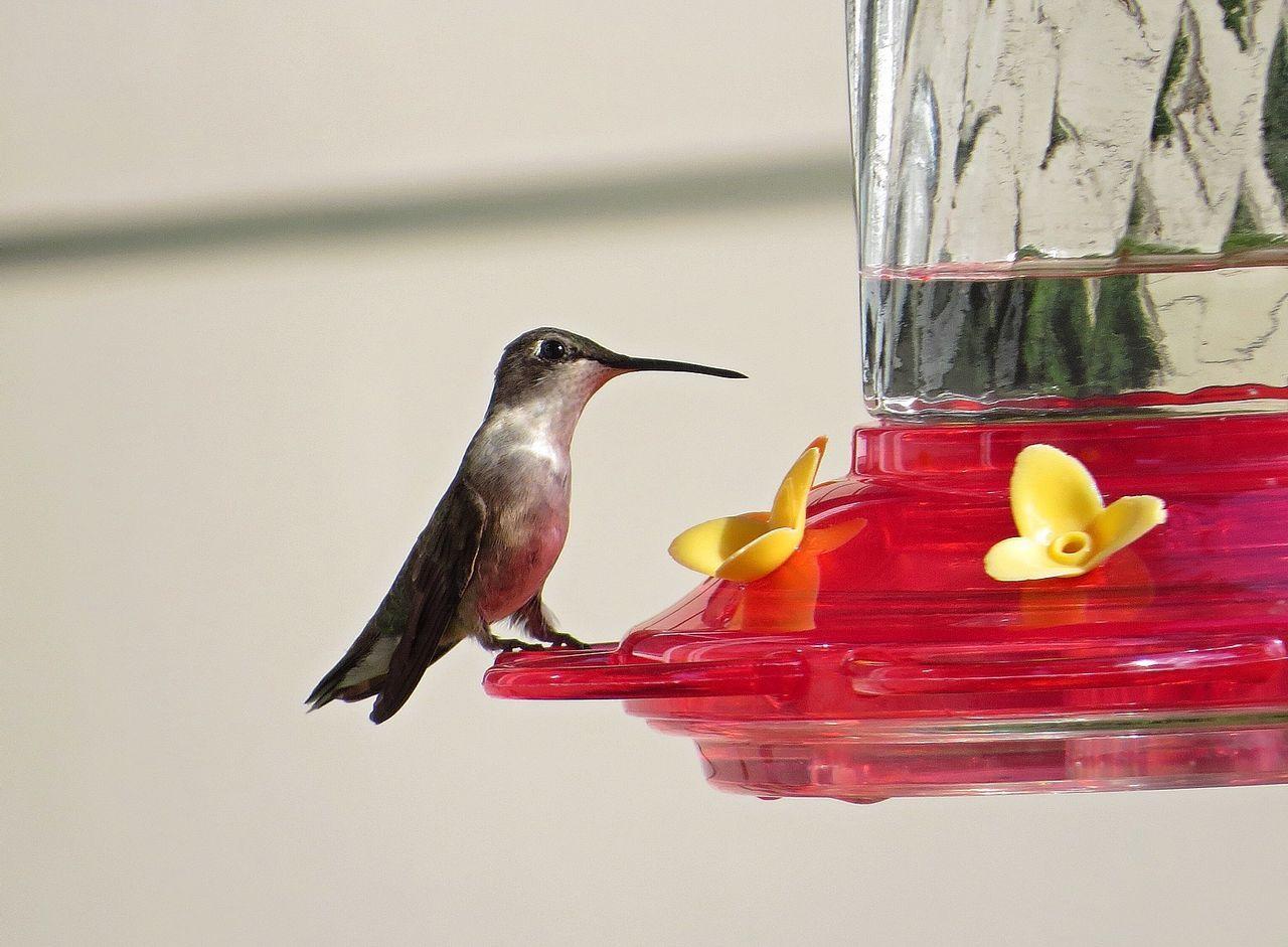 Beautiful stock photos of hummingbird, Animal Themes, Animals In The Wild, Bird, Bird Feeder