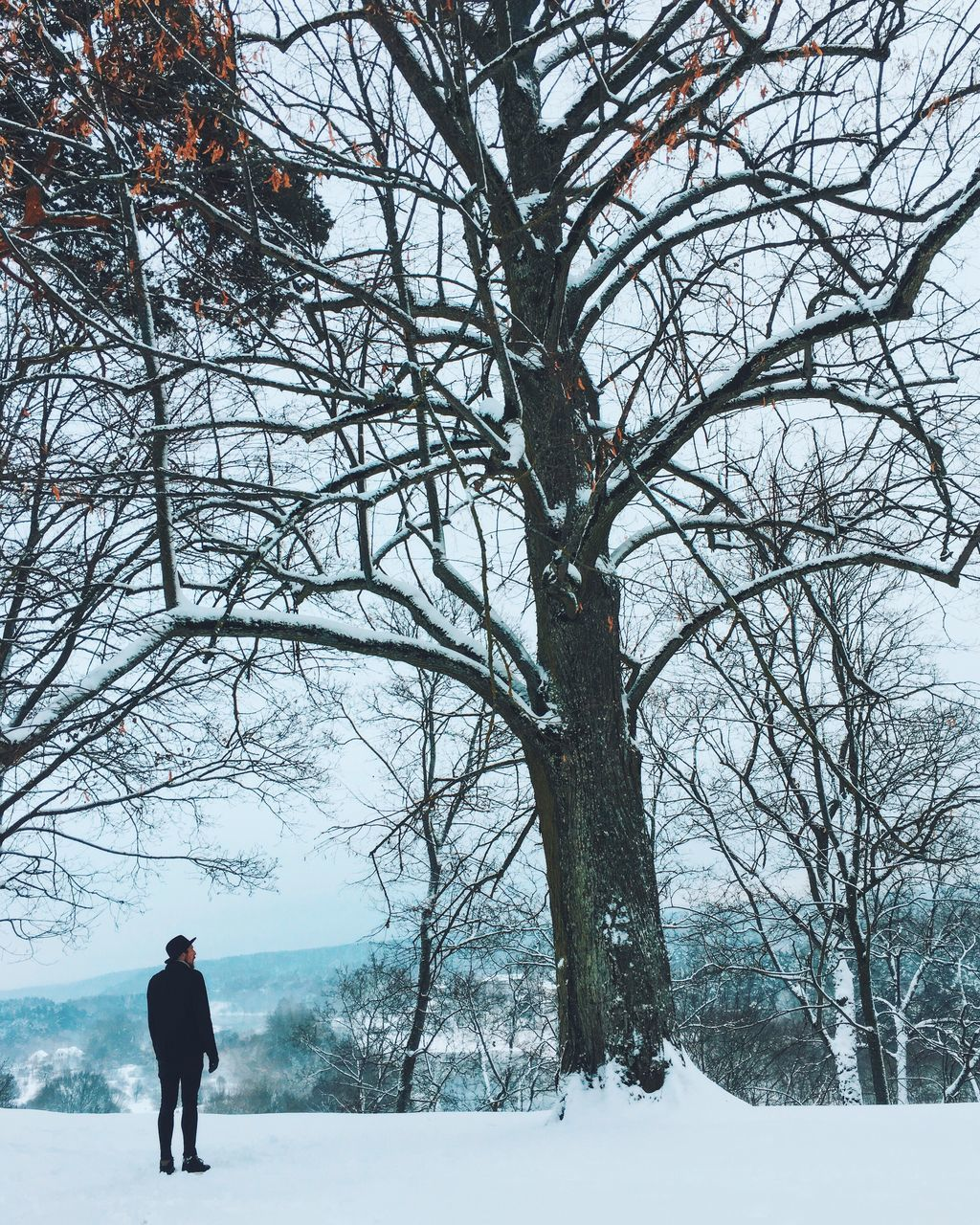 bare tree, winter, tree, real people, full length, cold temperature, nature, walking, snow, men, outdoors, leisure activity, lifestyles, day, branch, beauty in nature, sky, young adult, adult, people