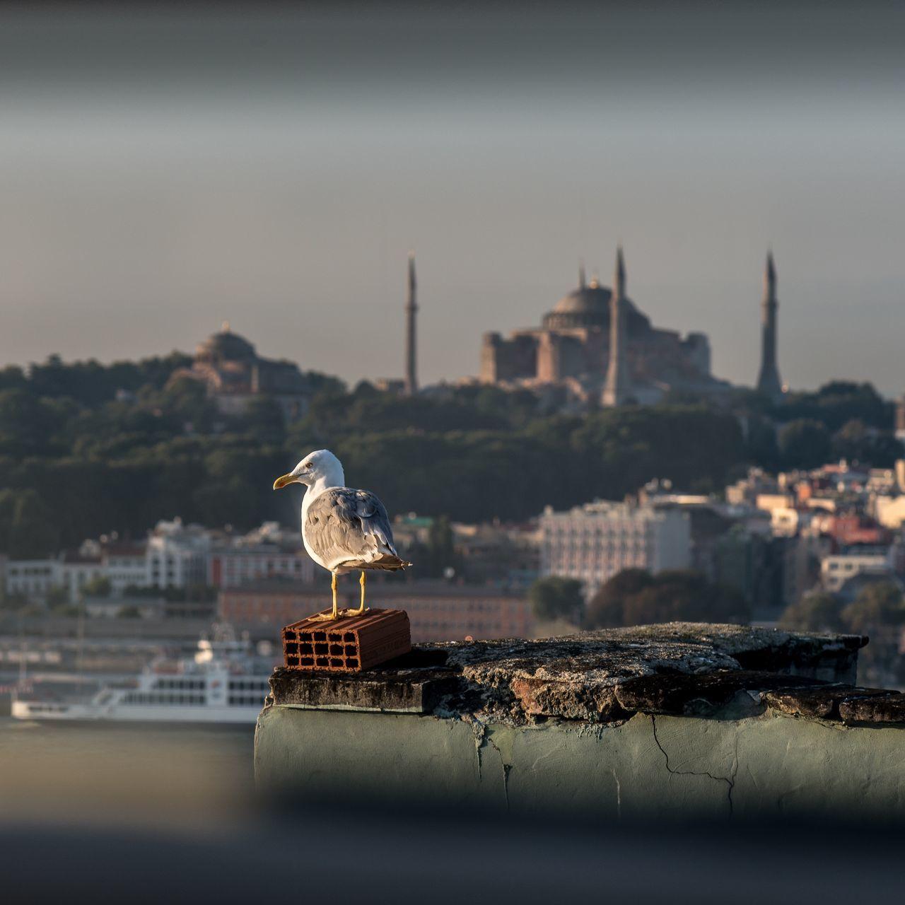 Bird Mosque No People Seagull Selective Focus Tourism