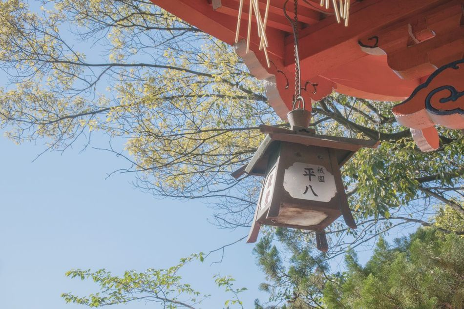 Tree Low Angle View Hanging No People Branch Day Lantern Bare Tree Outdoors Sky Clear Sky Nature Architecture Kyoto City