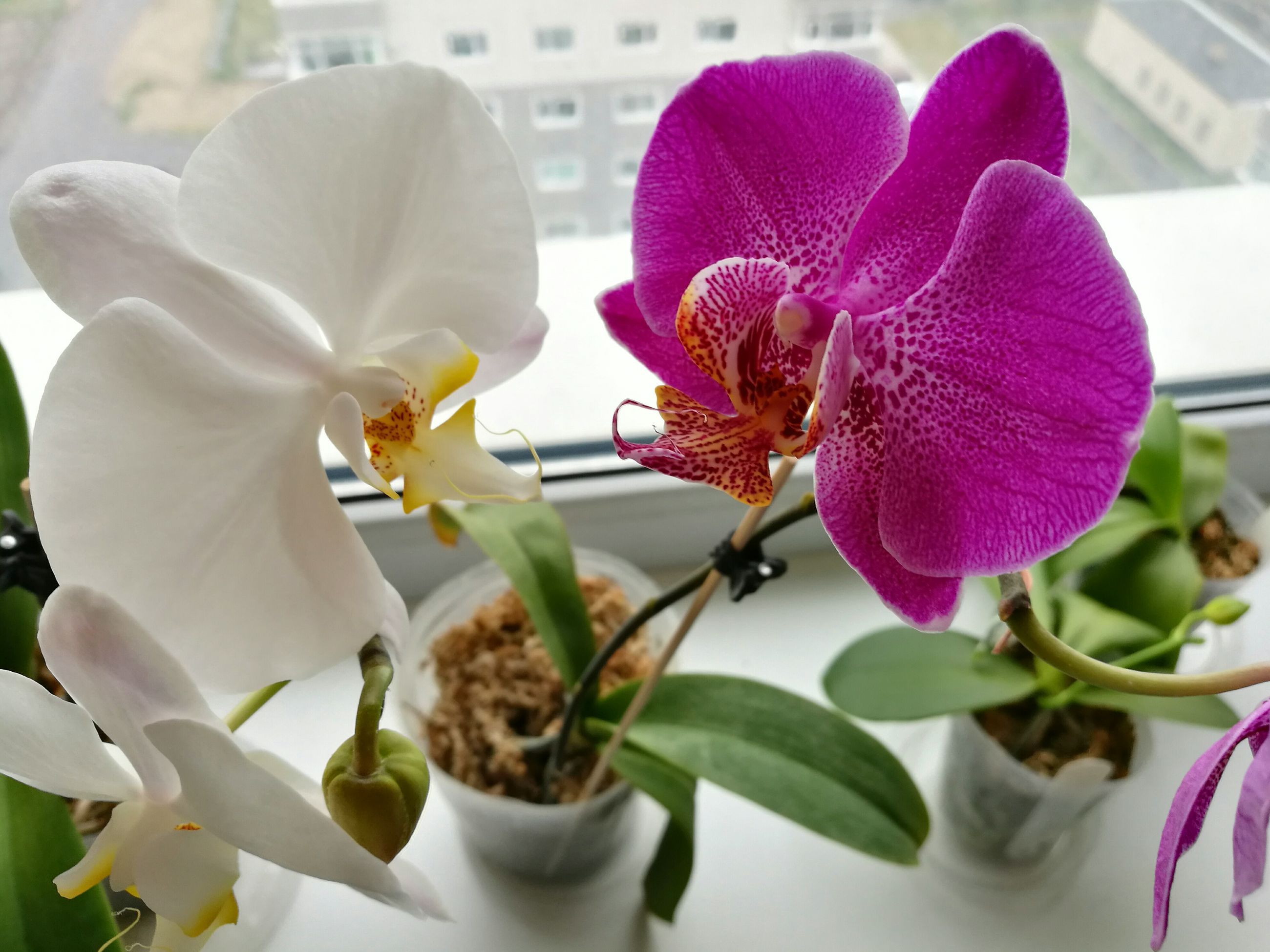 flower, petal, freshness, flower head, fragility, close-up, beauty in nature, orchid, growth, nature, purple, plant, stamen, pollen, blooming, focus on foreground, no people, in bloom, stem, botany, blossom, pink color, day, softness, selective focus