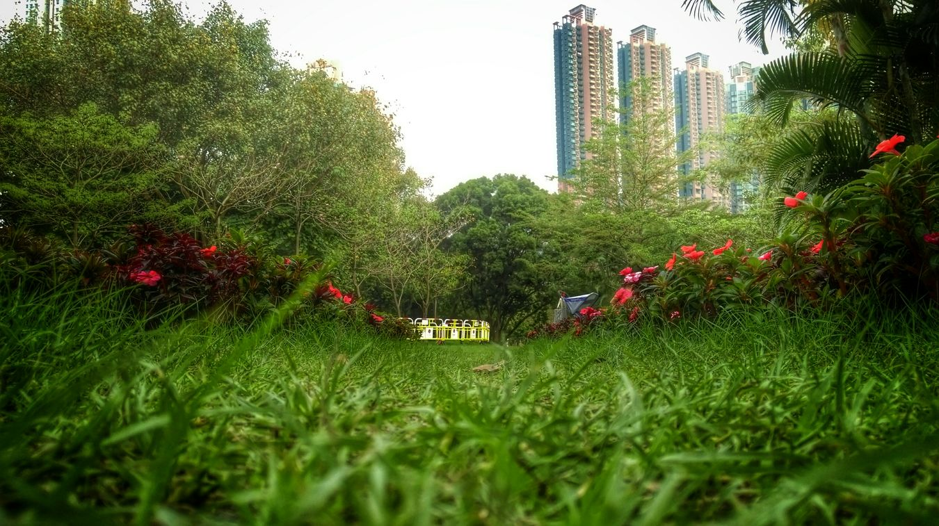 Looking at things from ground level, because eye level is too mainstream Walking Around The Grass Is Green Relaxing Taking Photos Park