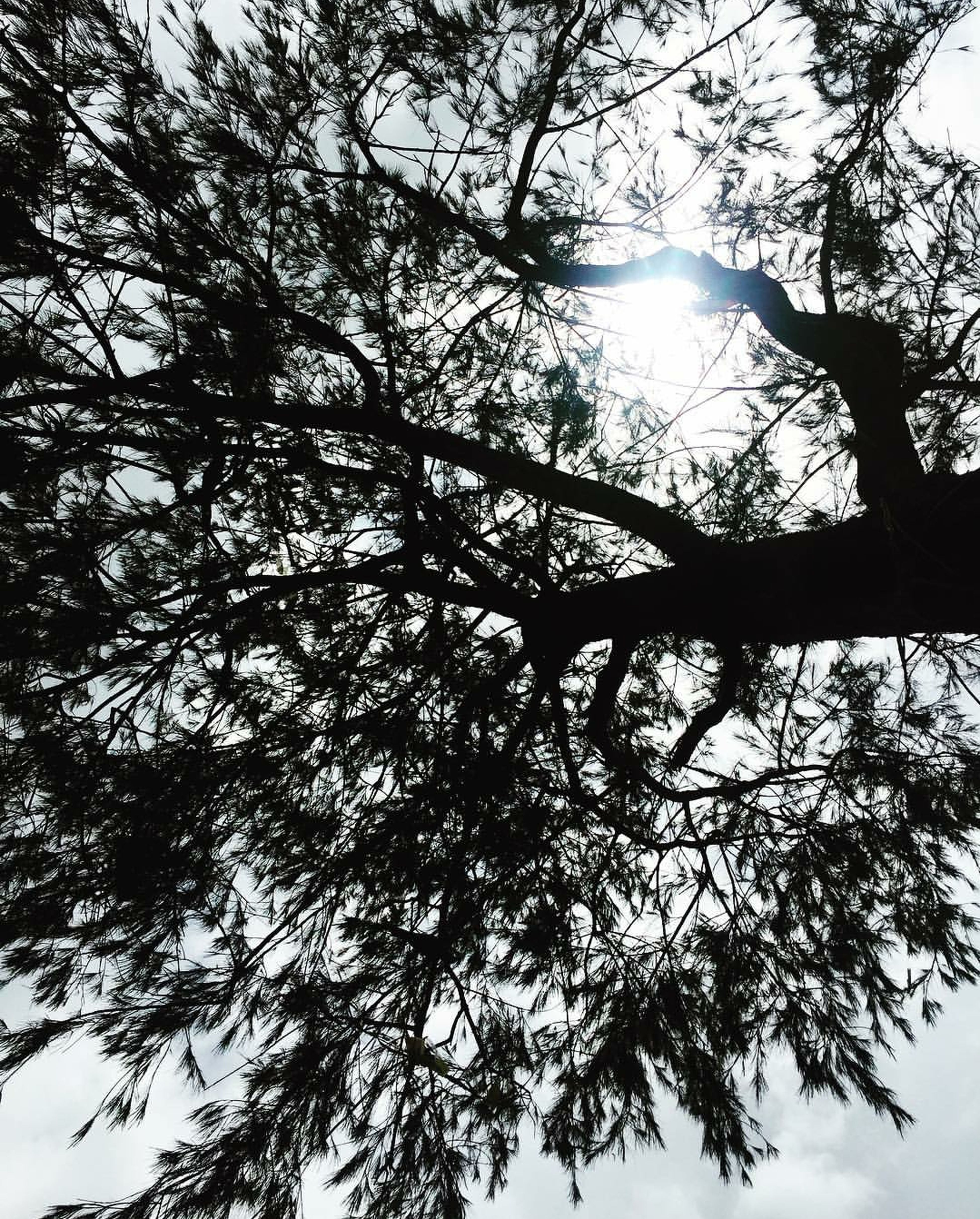 No Story... No Quotes.... jst Tree NatureGrowth .... Beauty In Nature Forest .... Outdoors Sky