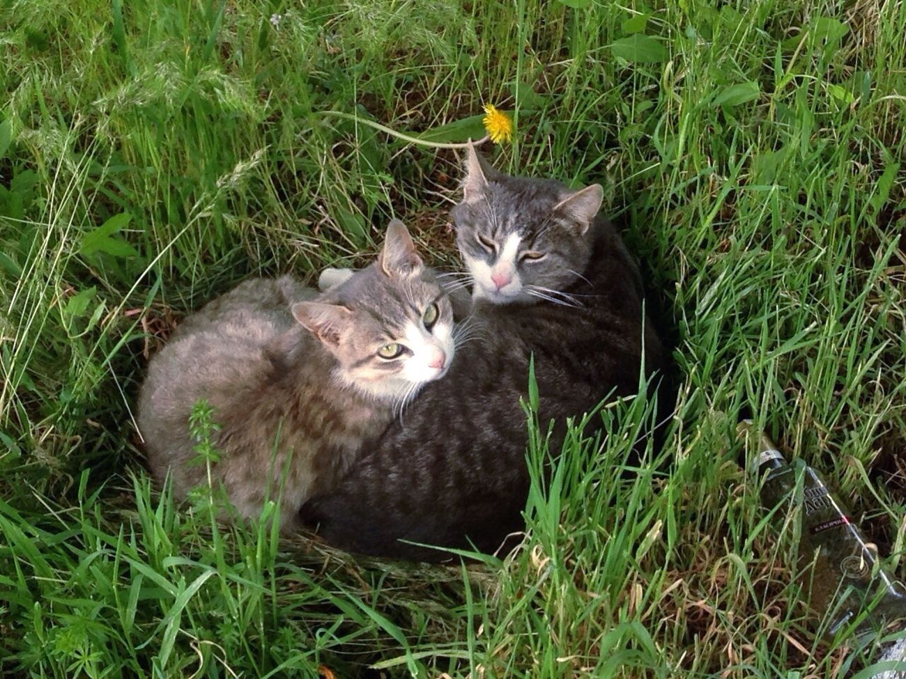 Коты Котик котэ кот Cats 🐱 Cats Of EyeEm Cats Cat Lovers Cat Cat♡ Homeless Cats