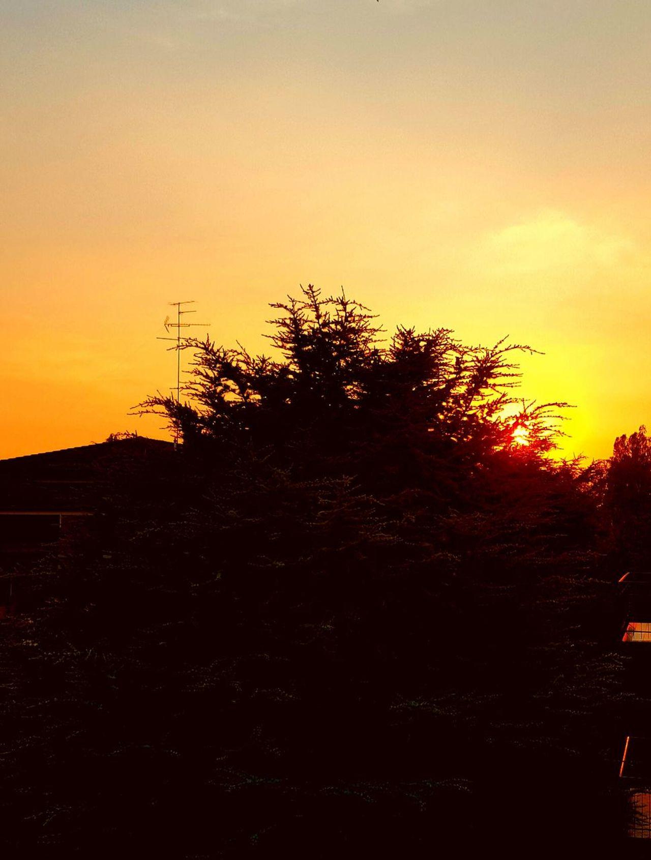 Sunset Tree Evening Sky