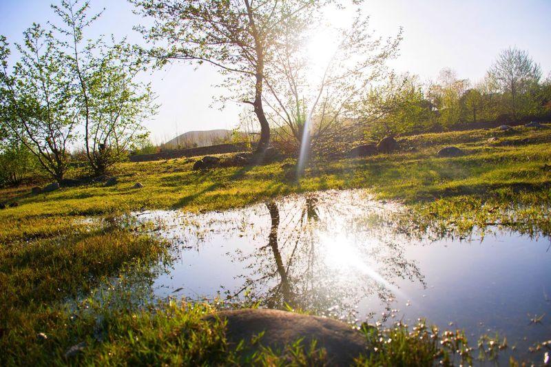Spring Springtime Spring Colours Sun Sunlight Sunny Day Trees Grass Lake
