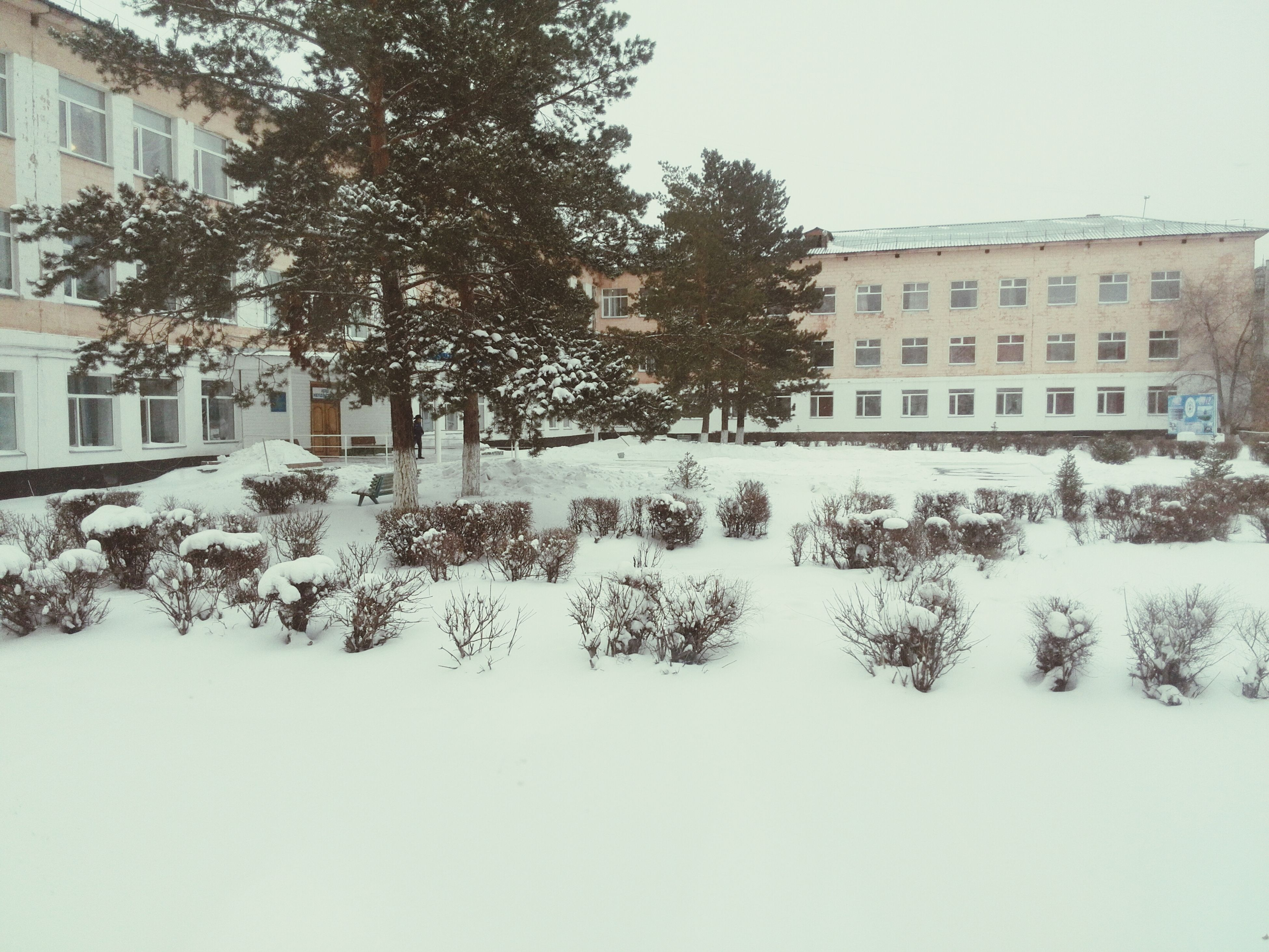 building exterior, architecture, built structure, tree, residential structure, residential building, house, window, building, clear sky, day, snow, winter, outdoors, city, wall - building feature, no people, growth, cold temperature, plant