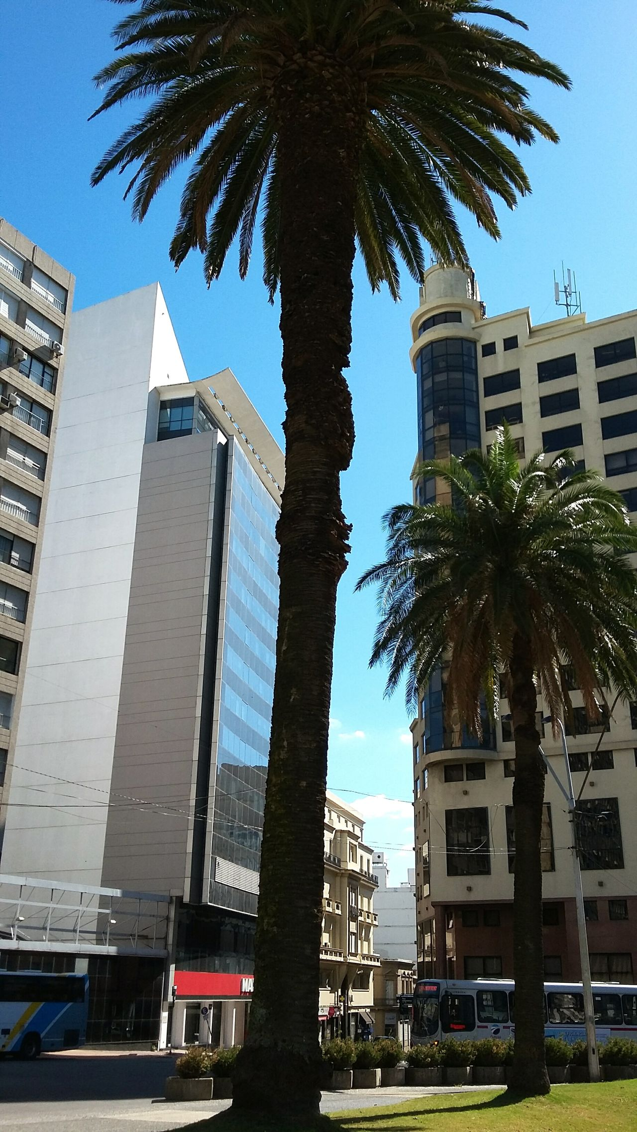 Lonely giant. Palm Tree Architecture Low Angle View Built Structure Skyscraper City Tree Building Exterior Travel Destinations Business Finance And Industry Sky Outdoors Day No People Modern Cityscape Glass Skyscrapers Sky And Clouds City City Life Montevideo Curtain Walls Architecture Plants