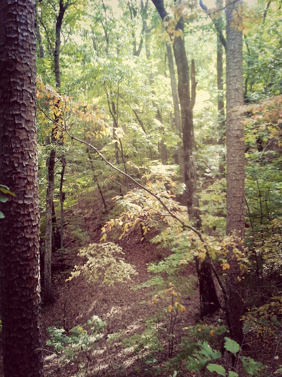forest, nature, tree, day, outdoors, tree trunk, no people, tranquility, beauty in nature, scenics, plant