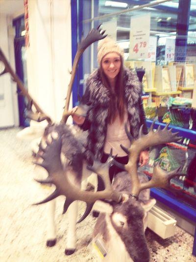 Reindeer Sighting