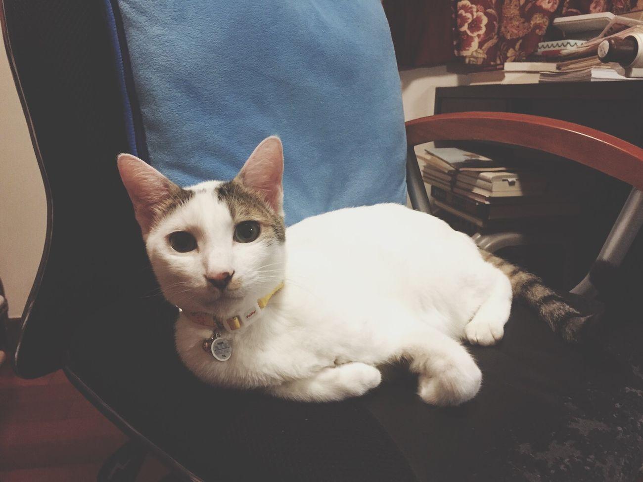 Happy birthday my sweetie ! HappyBirthday Cat Meow Son Macau Fouryearsold