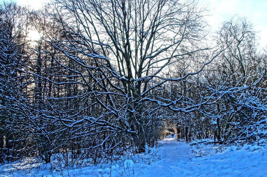 Wintertime Bare Tree Beauty In Nature Branch Cold Temperature Day Enjoying Life EyeEm Gallery EyeEm Nature Lover Frozen Happy Time Have A Nice Day♥ Hello World ✌ Landscape Nature Outdoors Relaxing Scenics Sky Snow Snowing Sunny Day Taking Photos Tree Winter