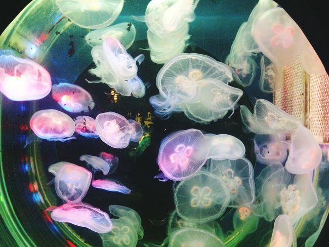 Amazing Wonderful WaterCreature Summer My weekend in aquarium … 😋