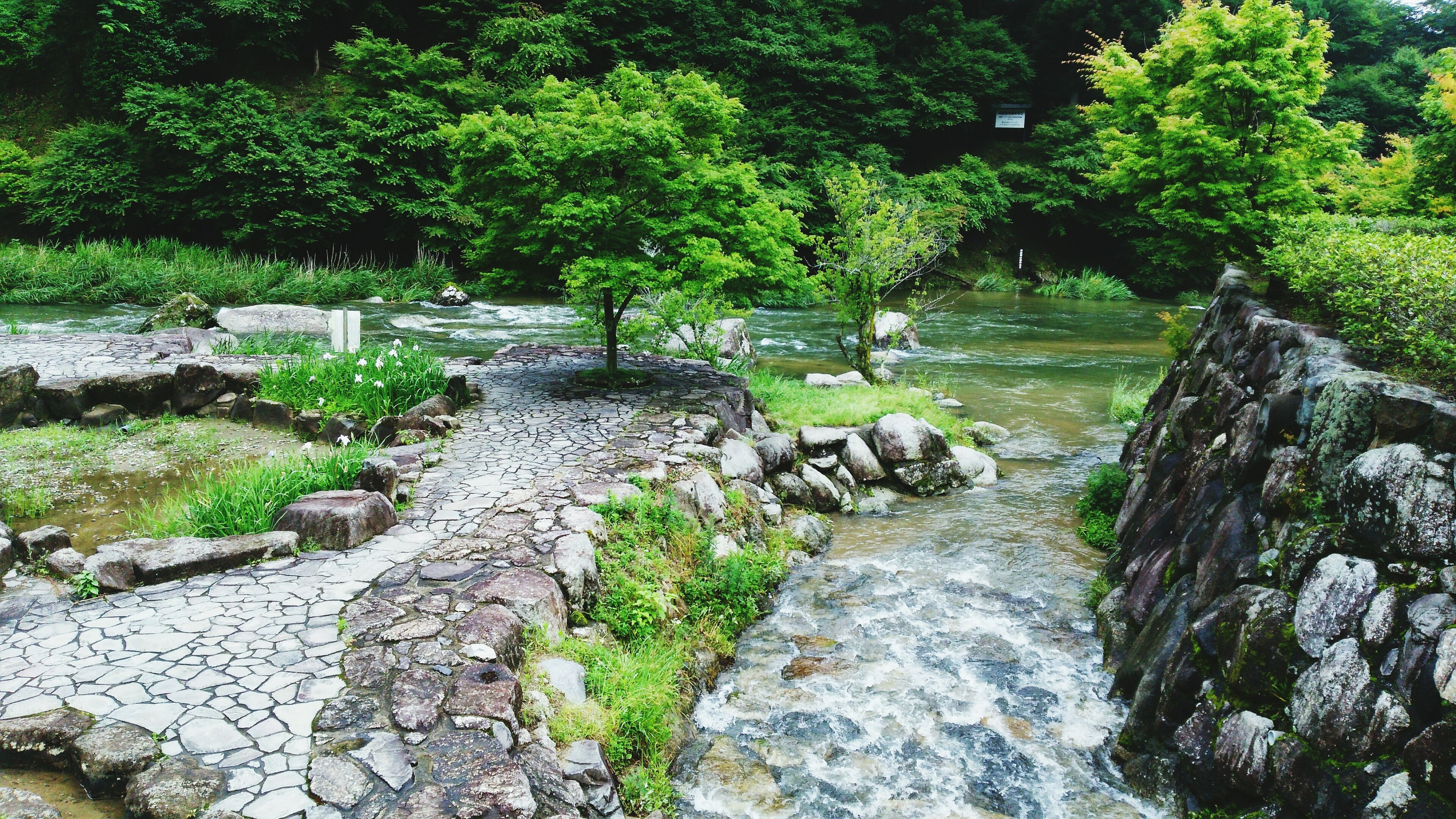 tree, water, green color, forest, stream, rock - object, nature, plant, growth, tranquility, beauty in nature, flowing water, flowing, moss, scenics, stone, rock, tranquil scene, day, river