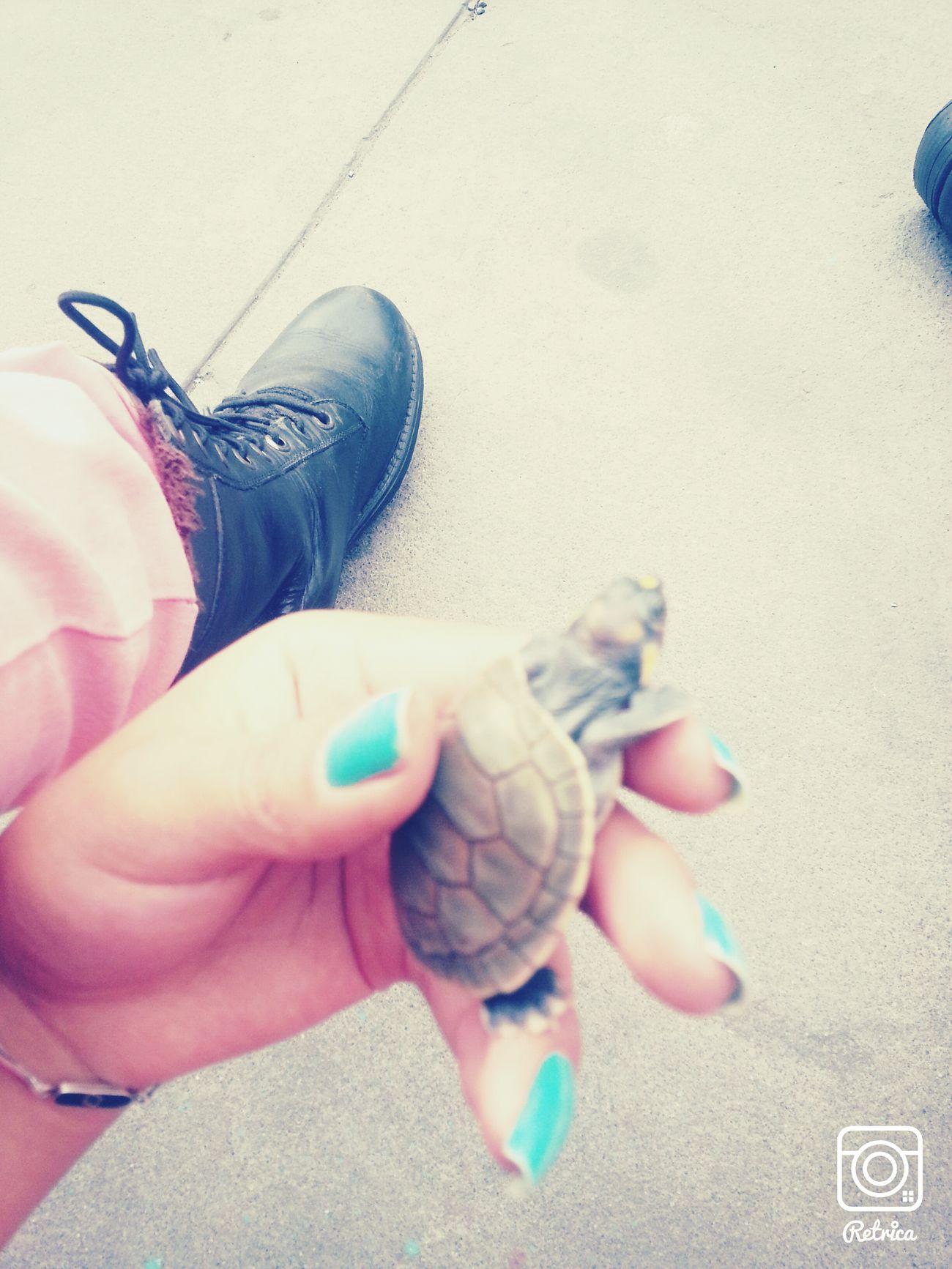 Turtle Ninja I Love You ❤ Alexander