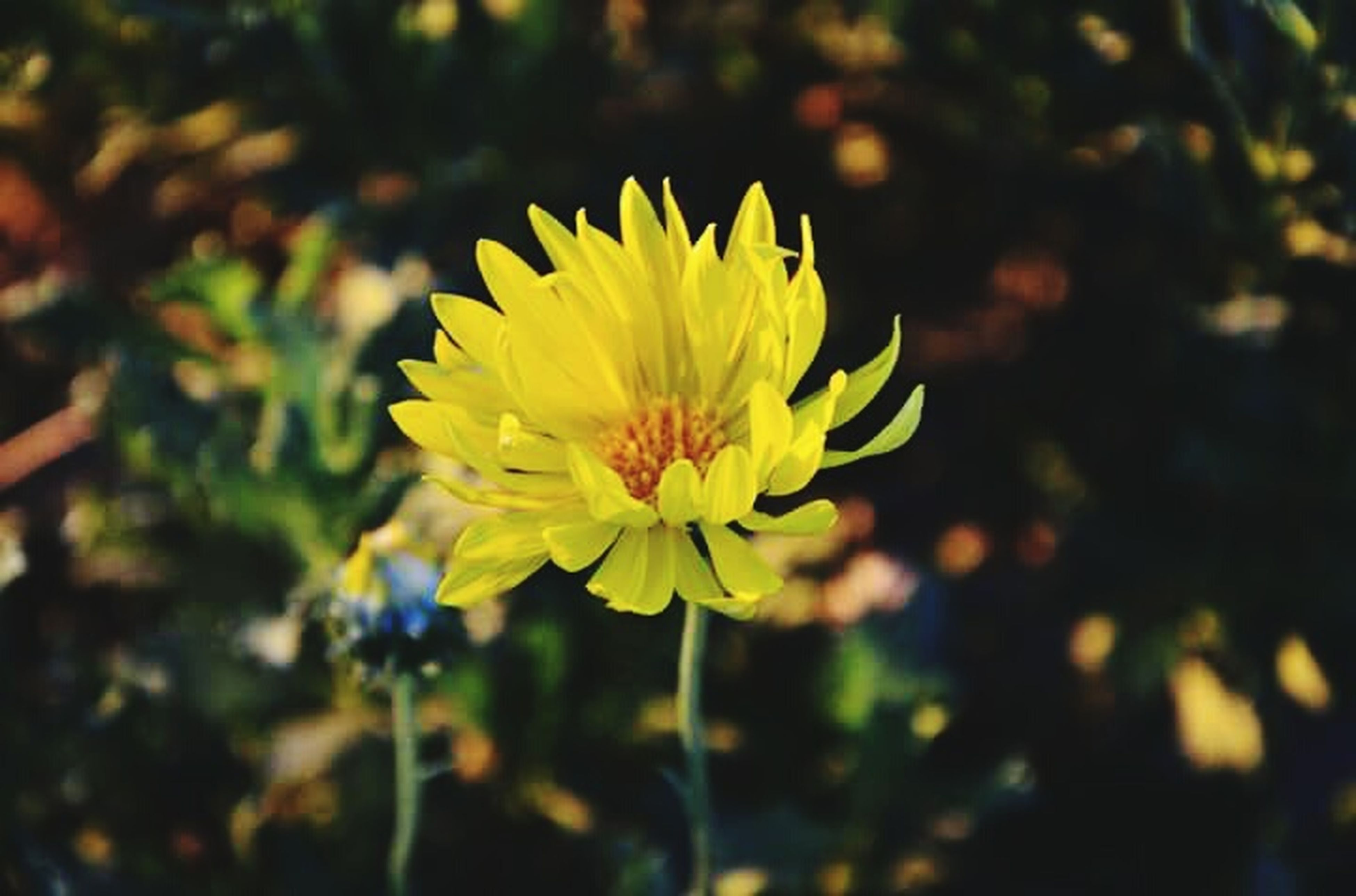 flower, yellow, nature, growth, petal, fragility, plant, beauty in nature, freshness, no people, spring, blooming, flower head, close-up, outdoors, day